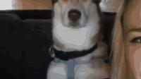 有趣的宠物滑稽视频