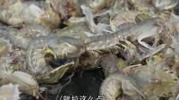渔民大哥出海捞虾爬子, 捞了一网个头真不小, 大哥却不是很高兴。