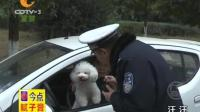 谭警官别咬我的狗