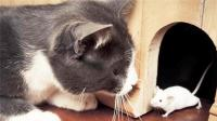 猫咪抱着老鼠使劲舔, 老鼠也非常享受, 网友: 舔干净再吃