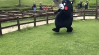 日本熊本熊和绵羊赛跑, 这画面太奇葩, 好奇到底谁赢了?