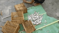 用竹子自制传统捕鱼笼, 2小时后鱼获一大堆, 看完觉得很实用