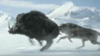 最新索尼巨制《阿尔法》, 男子与狼相依为命, 完美狩猎合作!