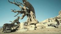 最新猛片《阿尔法》, 遭遇狼群攻击, 男子危急关头上树求生!