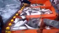作为一名钓鱼人, 看到如此壮观的鱼群画面也有点蒙圈!