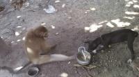 這只猴子將犯賤發揮到了極致, 網友: 真想抓過來打一頓!