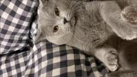 当猫咪看到铲屎官手里的刀时, 它渐渐的冷静了下来