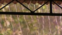 """印度竟下""""血雨""""! 连降两个月, 科学家分析: 来自太空的产物!"""