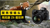 尼康Z6升格镜头下的小熊猫,为何如此可爱?!【严肃数码】