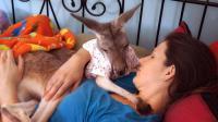 美国女子领养袋鼠, 把袋鼠当作亲儿子养, 给它喂牛奶穿童装!