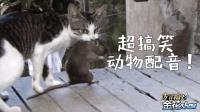 四川方言爆笑: 当这些搞笑的小动物讲四川话, 看完开心又解压!