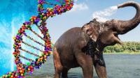 抗癌新突破, 科学家发现大象免疫癌症原因, 癌症有望被攻克