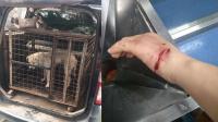 温州流浪狗连续咬伤73人 警方抓获可疑狗