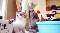 被大胖猫抢玩具小猫咪气坏了, 因为打不过只好躲在盆子里生气