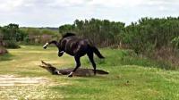 鳄鱼趴在河边睡觉, 野马突然跑过来狠踹2脚, 这是要搞事情?