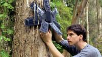 外国学霸用旧手机保护60万公顷森林, 再也不怕有人盗伐!