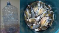 野外求生, 海边用矿泉水瓶捕鱼, 就能有源源不断的鱼获了