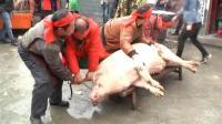 土家杀猪仪式! 念祭文千人同吃刨汤宴 感受乡村温情