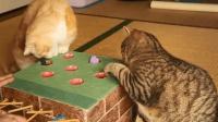 真正的逗猫神器, 引来两只猫咪争抢, 猫咪: 我可以玩一天!