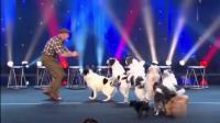 9只狗狗同台表演, 主人真的很用心!