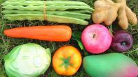 认识卷心菜等8种果蔬