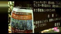 青木原树海实景播放, 走入日本最神秘的森林, 情旅自驾游系列视频