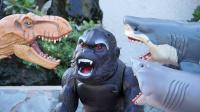 儿童玩具视频 金刚大猩猩攻击恐龙 鲨鱼袭击和猴子攻击怪物