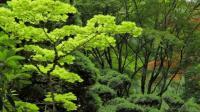 美景之美丽的花园