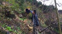 农村小伙上山摘橙子, 意外发现树上挂了一个大马蜂窝, 这可咋整?