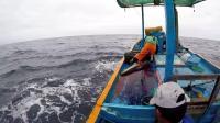 深海捕鱼之海豚鱼