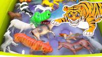儿童动物园动物学习颜色水池动物玩具学习野生动物名称