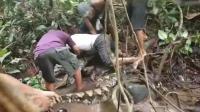 8米长巨蟒缠绕渔民脚踝 最终被6人制服