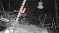励志!老鼠坚持5个多小时 只为跳上喂鸟槽
