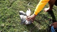 捕鱼之撒网网鱼