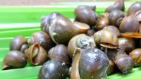 荒野生存之烹饪野蜗牛椰子