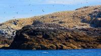 世界上最臭海岛, 每年清理2000吨粪便, 隔着屏幕都有味儿!