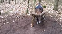 男子小树林中发现一只盘羊直撞小树, 靠近后, 接下来画面让人泪目!