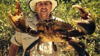 红树林徒手抓巨型螃蟹, 看着大蟹钳里的肉, 一只就能吃到撑!