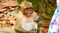 蟾蜍被调皮的猴子逮住, 下一秒游客直接看懵了, 镜头拍下全过程!