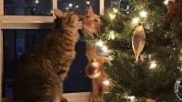 有宠物的家庭准备的圣诞树果然与众不同