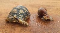 """喂乌龟吃蜗牛, 网友 都是""""蜗居"""", 何必互相伤害!"""