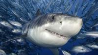 邪恶科学家篡改鲨鱼基因, 激活上古猛兽追杀人类, 吾儿奉先何在!