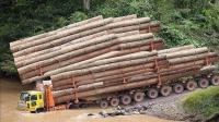 大型木材运输机器, 森林装载树木, 这机械还是第一次见!