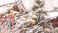 雨雪漫洒环翠楼20181211