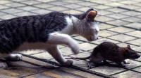 猫咪都怎么了, 竟然连老鼠都不吃了? 网友: 不能再宠着它了