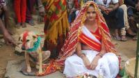印度奇葩婚礼, 18岁少女嫁给流浪狗, 只为保村民平安