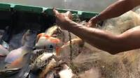兄弟俩下网捞鱼, 鱼儿太能扑腾, 没想到船都翻了