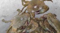 农村小哥哥晚上赶海抓螃蟹, 收获了农民的海鲜美食