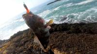 神一样的钓鱼人, 海边仅用一根鱼线钓鱼, 看到鱼获我无话可说!