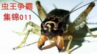 《虫王争霸集锦011》十七路左钩白牙青, 斗蟋蟀斗蛐蛐